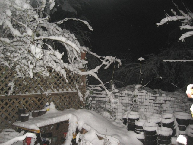 Snow, Feb. night, branches and fences, good 2014 (14)