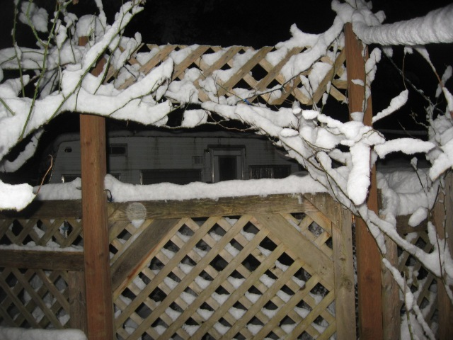 Snow, Feb. night, branches and fences, good 2014 (22)