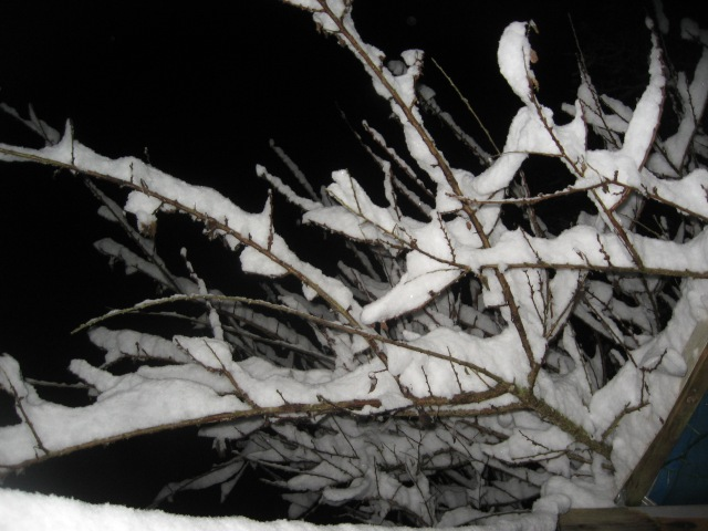 Snow, Feb. night, branches, great, 2014