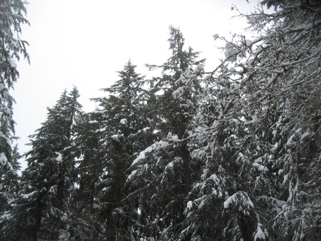 super-bpwl-snow-2-5-17-1