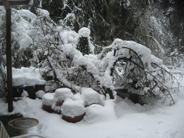 super-bpwl-snow-2-5-17-13
