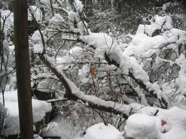 super-bpwl-snow-2-5-17-3