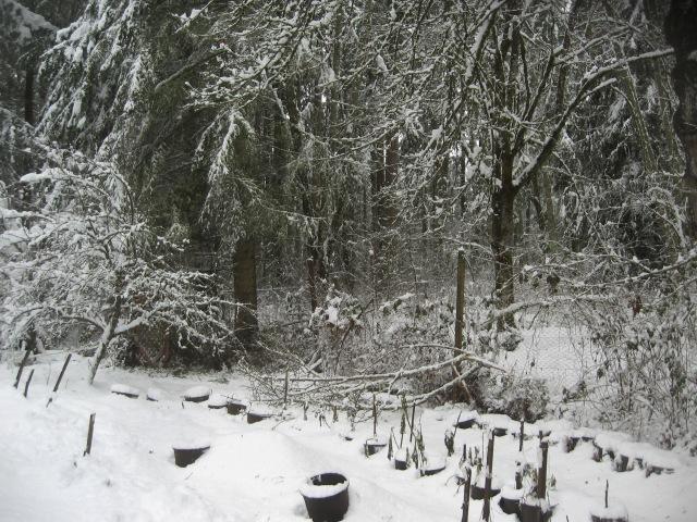 super-bpwl-snow-2-5-17-4