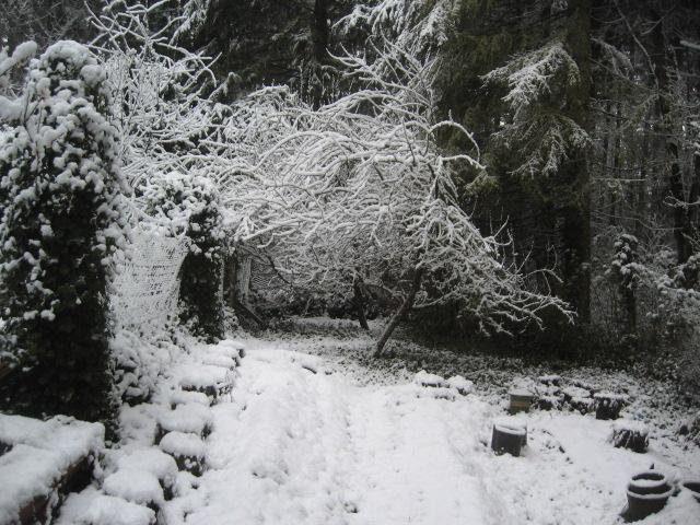 Covid, day 2 snow, garden, best