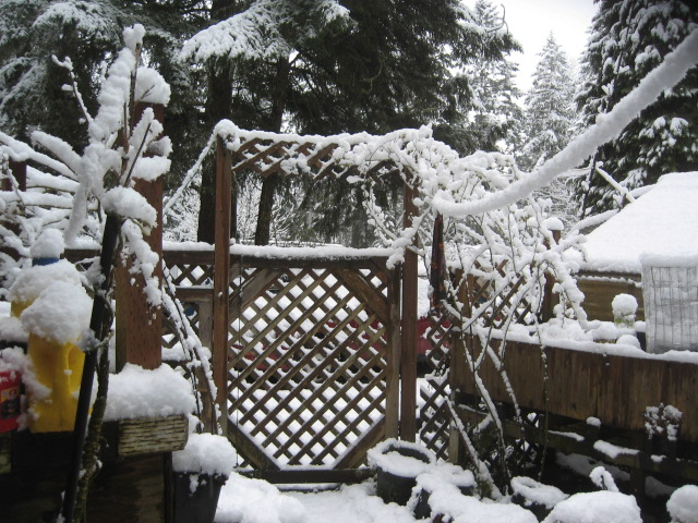 Covid, day 2 snow, gate, best